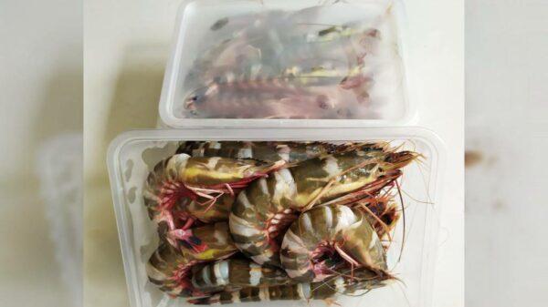 Aneka Frozen Food - Kedung Kandang, eMBe UMKM, UMKM GKJW.org