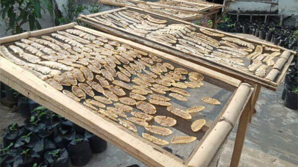 Proses Produksi Sale Pisang - Tunglur Kediri, eMBe UMKM, UMKM GKJW.org