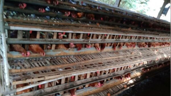 Telor Ayam Coklat - Ringinpitu Peniwen Malang, eMBe UMKM, UMKM GKJW.org