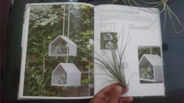 Tillandsia Juncifolia - Tunjungsekar Malang, eMBe UMKM, Gerakan Warga GKJW